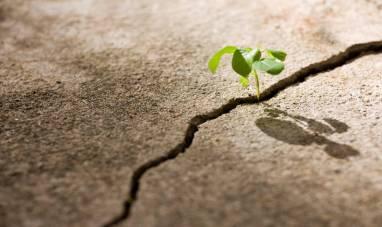 plant cement